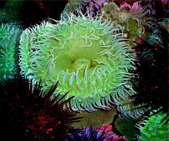 Monterey Bay Aquarium Anemone by Renee D. Miranda