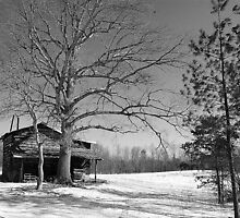 North Carolina Log Shed by Michele Conner