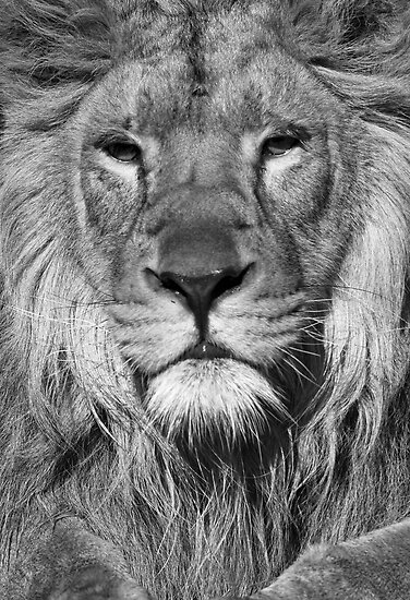 King of the Jungle by Stephen Knowles