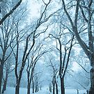 Winter III by jojocraig