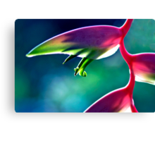Sexy Pink - heliconia flower Canvas Print