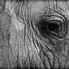 Elephant Eye by RONI PHOTOGRAPHY