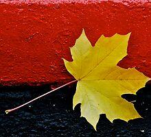 Falls first leaf by Jeffrey  Sinnock