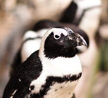 Penguins by Simon Marsden
