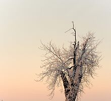Ice Tree by dp-photos