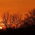 Orange Winter Sunrise - Chelmsford, UK by MichelleRees