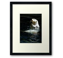 Sea Otter shaking up his dinner Framed Print