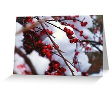 Red Berries Covered in Snow Greeting Card