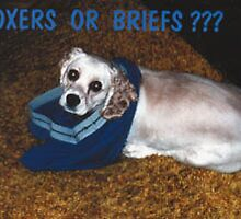 Boxers or Briefs ?  by Mindy Miller