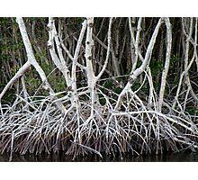 Mangrove Roots Photographic Print