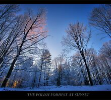 A COLD polish forest by capturedjourney