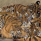 Sleepin with Mom by Kathy Newton