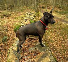 The Terrier of my Dreams by Jamie  Green