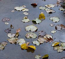 Leaves on Wet Cement by ScottPhotos