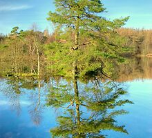Reflections of a Scots Pine by Jamie  Green
