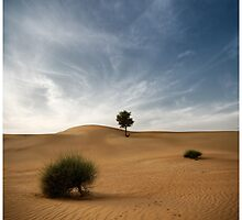 Desert Poetry I - UAE, Dubai by fraenk