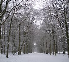 Langbroek woods in the winter by Kate Harriman