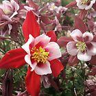 Columbine Garden - Littleton, Colorado by mackography