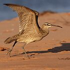 Whimbrel In Take Off Mode by Gary Fairhead