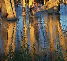 Cottonwood Reflections by Kim Barton