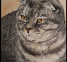 'Bundy' the Scottish Fold by Pauline Winwood