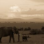 elephant walk by Dan A&#x27;Vard