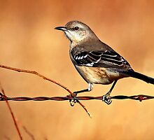 Mockingbird by Nick Conde-Dudding