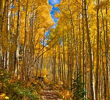 Aspen Trail by 1832pro