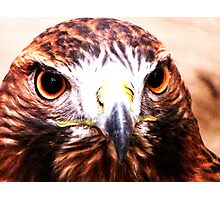 Andi- The Golden Eagle Photographic Print