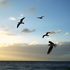 Six Flying Gulls  by Victoria McGuire
