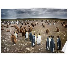 Penguin Colony Poster