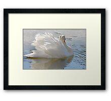 A Swans Beauty Framed Print