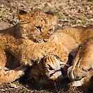 Gentle mother and cub by Shaun Whiteman