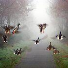 Flying Ducks by pobsb