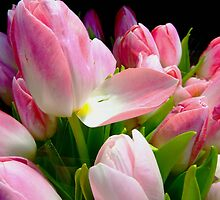 Tulips are announcing the Spring ! by Franlaval