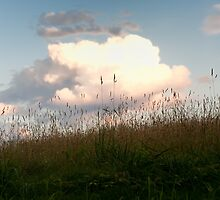 Hill Side by SueGPhotography