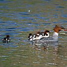 On board the Goosander by sandmartin
