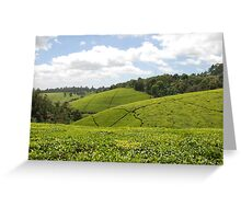 Kenyan Tea Fields Greeting Card