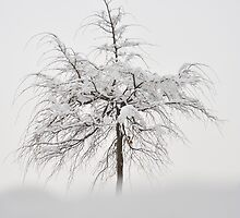 Winter Tree by Kasia Nowak