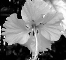 Bloom by Uncoloured