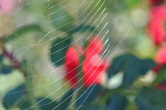 Web In A Rose Garden by MissyD