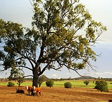 Cattle Station near Tamworth, NSW, Australia by Bev Pascoe