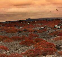 Galapagos's sunset by becks78