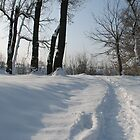 Snowy path by branko stanic