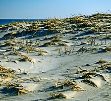 The Dunes by Paul Gitto