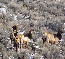 Elk in Sagebrush by © Betty E Duncan ~ Blue Mountain Blessings Photography