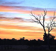 Sunrise through the front gate of Rainbow Farm by Coralie Plozza