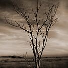 Holding on - Lone Tree by Tim Mannle