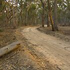 Track To Echuca  by mspfoto