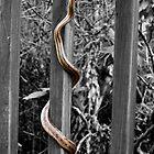 Snake by Edvin  Milkunic